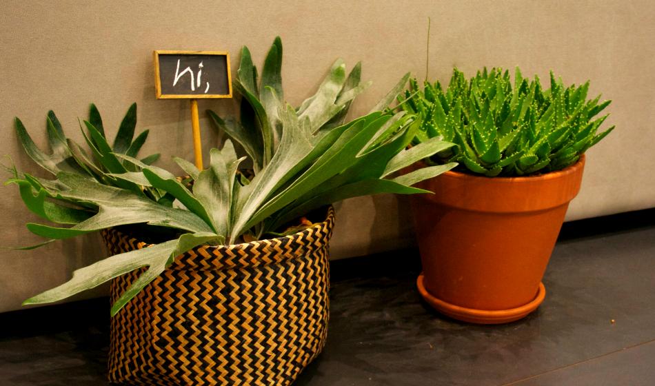 imm cologne 2015-pflanzen