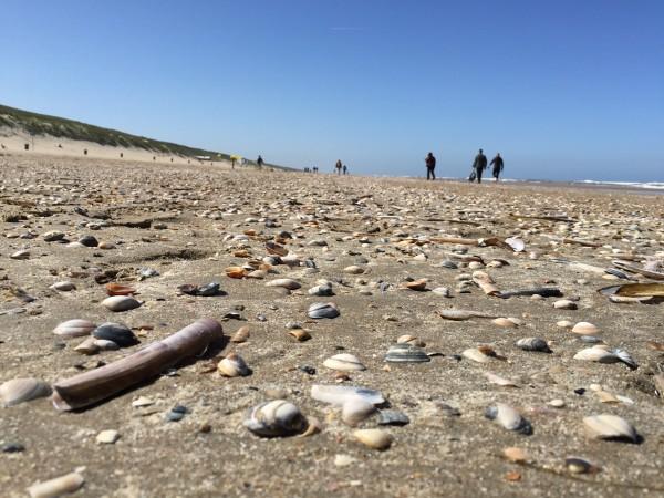 Schell ans Meer Seaview Strand Muscheln