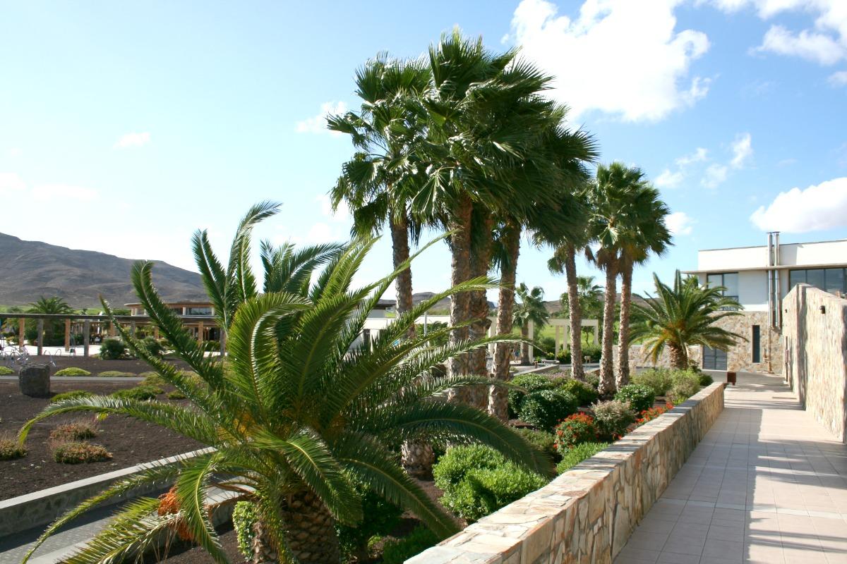 Fuerteventura_LasPlayitas_Palmen